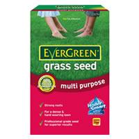 Evergreen lawn seed