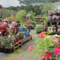 garden centre Oban