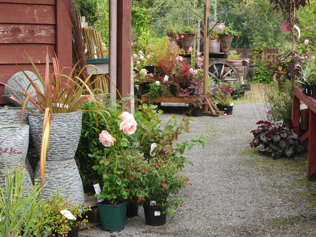 Find the perfect plant cakebreads garden centre oban for The perfect vegetable garden